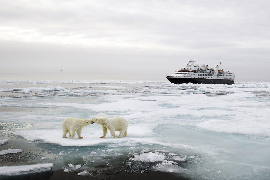 Ártico Crucero Silversea Expedición Osos Polares StarClass